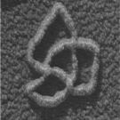 DNA knot as seen under the electron microscope